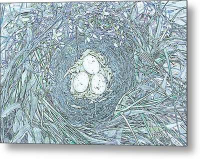 Nest Eggs By Jrr Metal Print by First Star Art