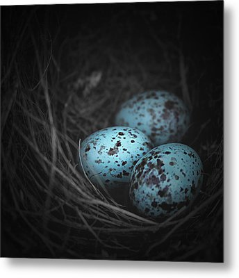 Nest Of 3  Metal Print by Trish Mistric
