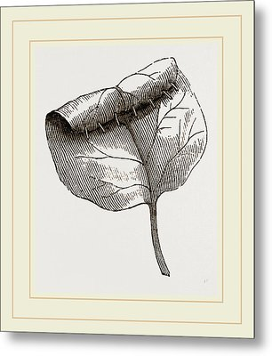 Nest Of Lilac-leaf-roller Metal Print
