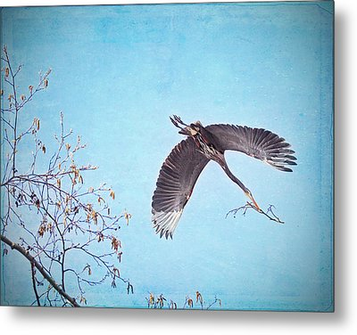 Metal Print featuring the photograph Nesting Heron by Peggy Collins