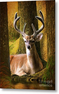 Metal Print featuring the photograph Nestled In The Woods by Kathy Baccari