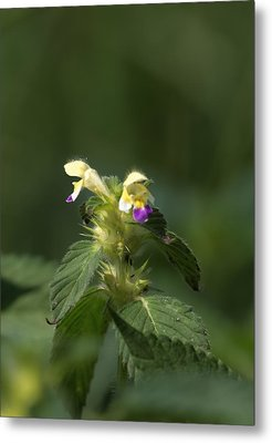 Metal Print featuring the photograph Nettle by Leif Sohlman