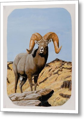 Nevada California Bighorn Metal Print
