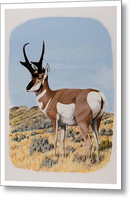 Nevada Pronghorn  Metal Print
