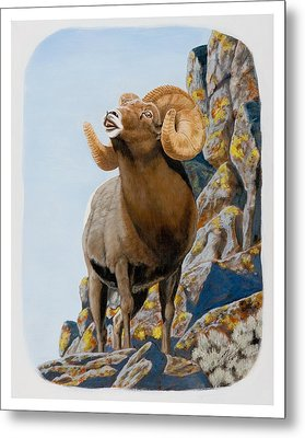 Nevada Rocky Mountain Bighorn Metal Print