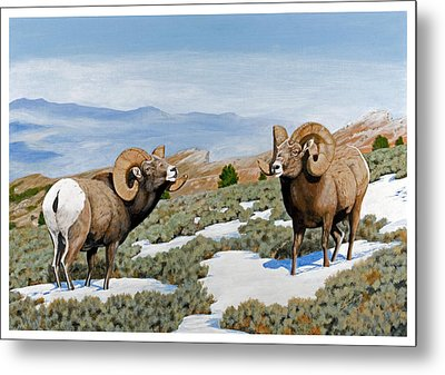 Nevada Rocky Mountain Bighorns Metal Print