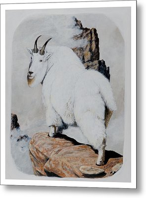 Nevada Rocky Mountain Goat Metal Print