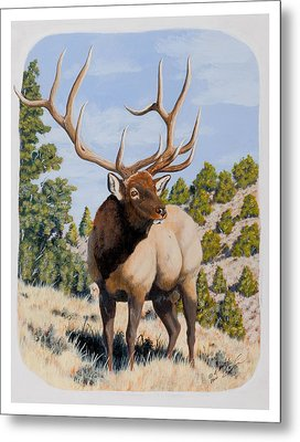 Nevada Typical Elk Metal Print