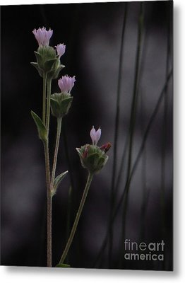 Metal Print featuring the photograph New Beginnings by Joy Hardee