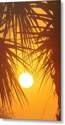 New Day In Paridise 2 Metal Print by Will Boutin Photos