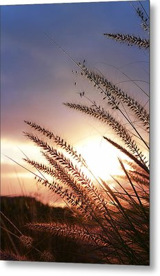 New Day Metal Print by Laura Fasulo