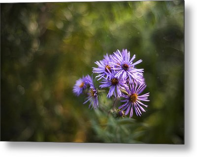 New England Asters Metal Print