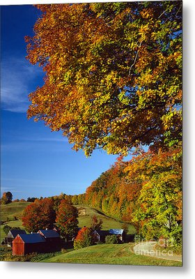 New England Autumn Metal Print by Rafael Macia