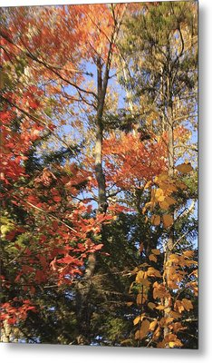 New England Trees Metal Print