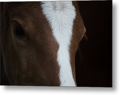 New Filly Metal Print by Kelly Kitchens