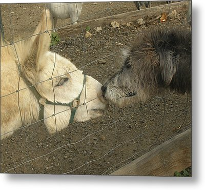 New Friends Metal Print by Susan Elizabeth Dalton