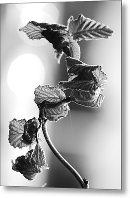 New Growth Metal Print by Jane Ford