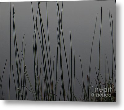 Metal Print featuring the photograph New Joys by Joy Hardee