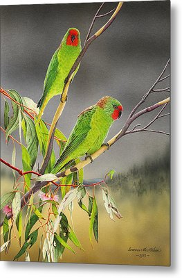 New Life - Little Lorikeets Metal Print by Frances McMahon