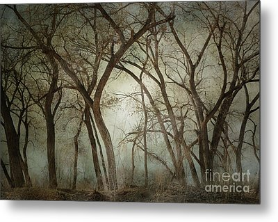 New Mexico Winter Woodland Metal Print by Andrea Hazel Ihlefeld