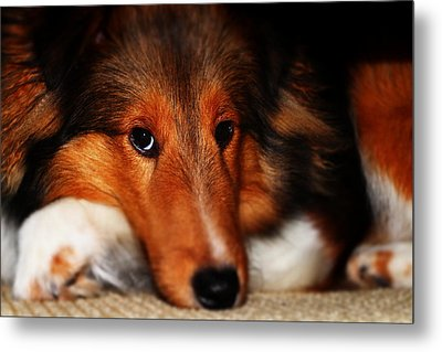 New Puppy Metal Print by Cortland Cronk