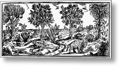 New Spain Flora And Fauna Metal Print by Granger