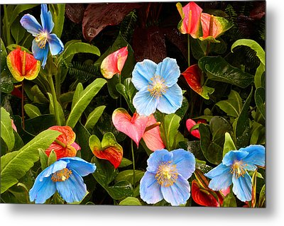 New World And Old World Exotic Flowers Metal Print by Byron Varvarigos
