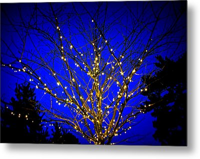 Metal Print featuring the photograph New York Botanical Garden Holiday Tree by Aurelio Zucco