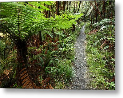 New Zealand Forest Metal Print by Les Cunliffe