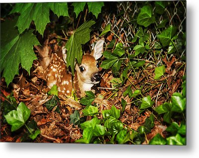 Metal Print featuring the photograph Newborn Fawn  by Eleanor Abramson