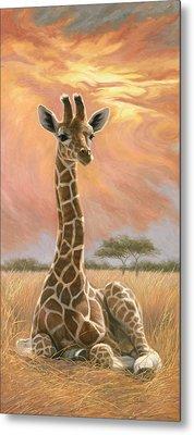 Newborn Giraffe Metal Print by Lucie Bilodeau