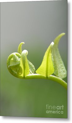 Metal Print featuring the photograph Newborn Leaves by Darla Wood