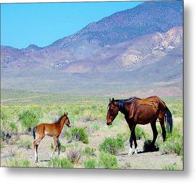 Newborn Mustang Foal Metal Print by Marilyn Diaz