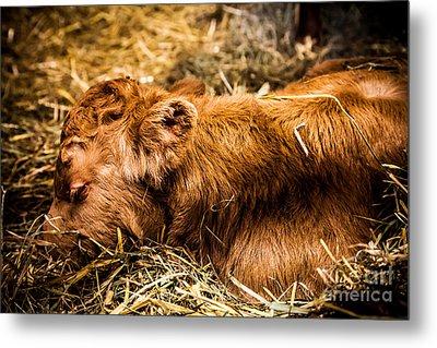 Newborn Nap Metal Print by Sue OConnor