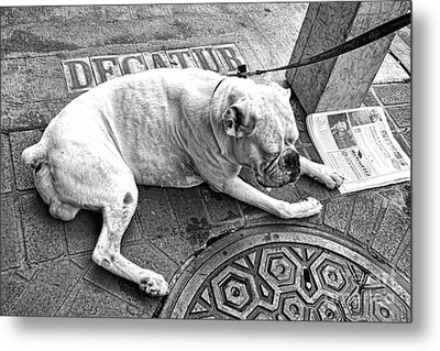 Newsworthy Dog In French Quarter Black And White Metal Print by Kathleen K Parker