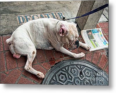 Newsworthy Dog In French Quarter Metal Print by Kathleen K Parker
