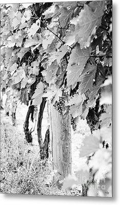 Niagara Grapes No.2 Metal Print