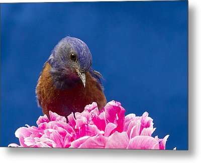 Nice Flower Metal Print by Jean Noren