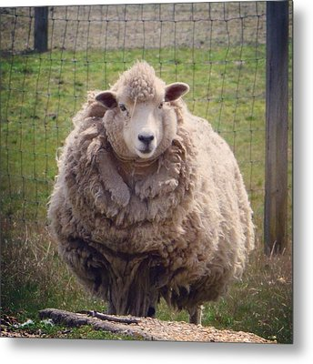 Nice To Meet Ewe Metal Print