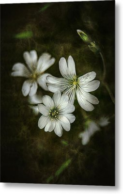 Nice White Flowers In Dark Metal Print by Gynt