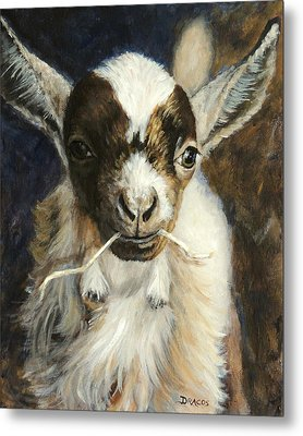 Nigerian Dwarf Goat With Straw Metal Print by Dottie Dracos
