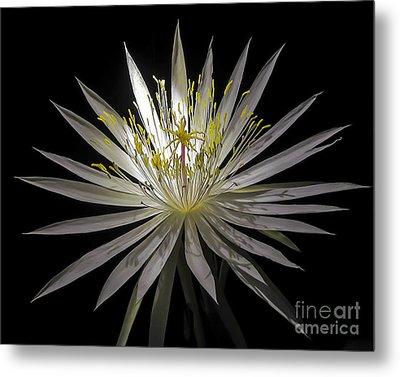 Night-blooming Cereus 1 Metal Print