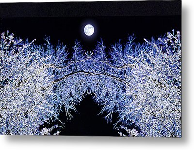 Night Blooms Metal Print