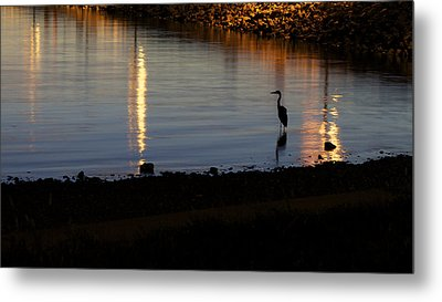 Metal Print featuring the photograph Night Fishing - A Great Blue Heron  by Jane Eleanor Nicholas