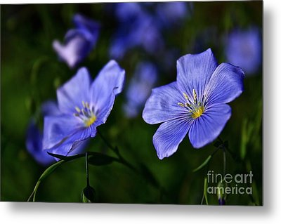 Metal Print featuring the photograph Night Garden by Linda Bianic