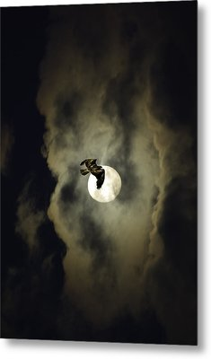 Night Hawk Metal Print