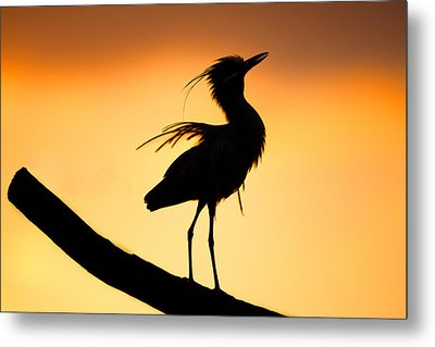Night Heron Silhouette 2 Metal Print by Andres Leon