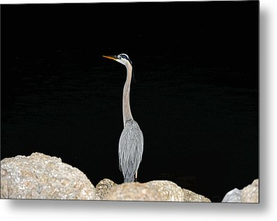 Night Of The Blue Heron 2 Metal Print by Anthony Baatz