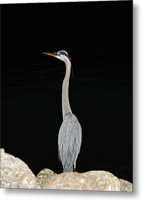 Night Of The Blue Heron 3 Metal Print by Anthony Baatz