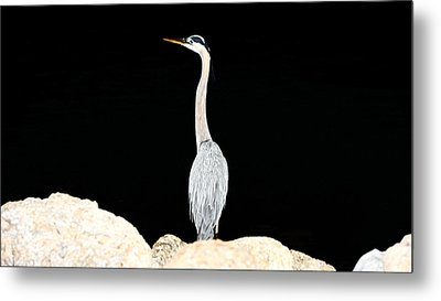 Night Of The Blue Heron  Metal Print